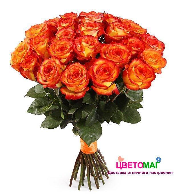 Букет 25 роз  Хай Меджик 50 см (Эквадор)