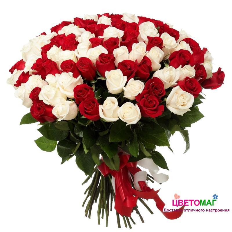 Букет 75 красных и белых роз Россия