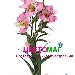 Альстромерии