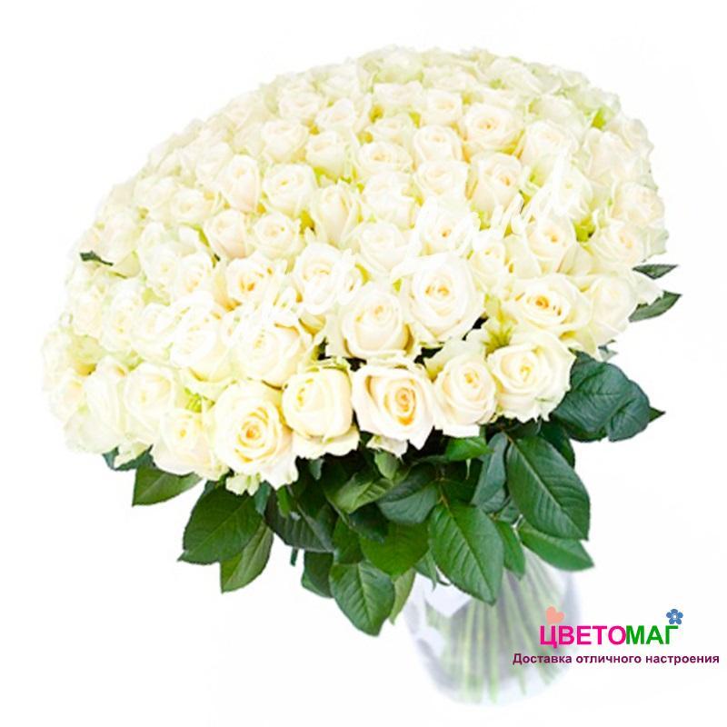 Букет 101 белая роза Россия