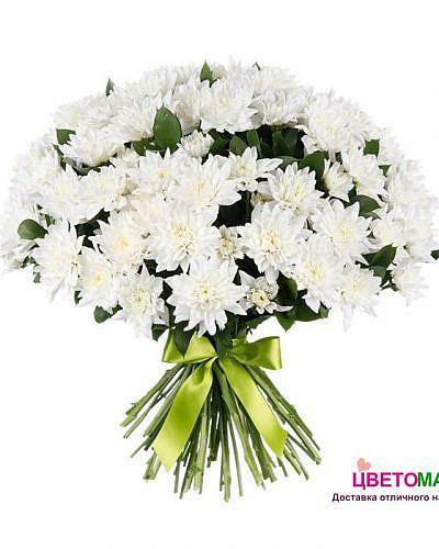 Букет из 15 белых хризантем балтика