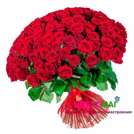Букет 101 красная роза Россия