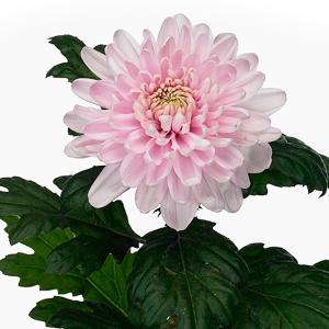 Штучные цветы