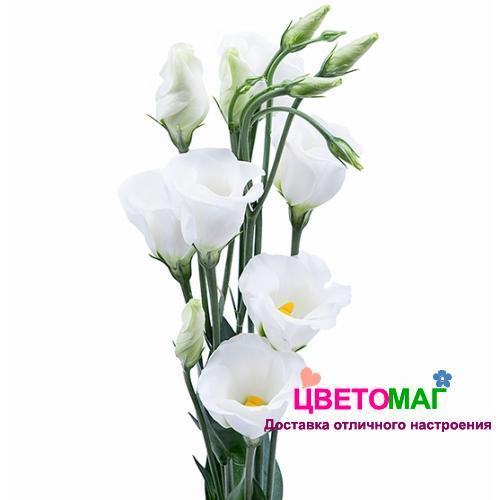 Белый лизиантус(эустома)