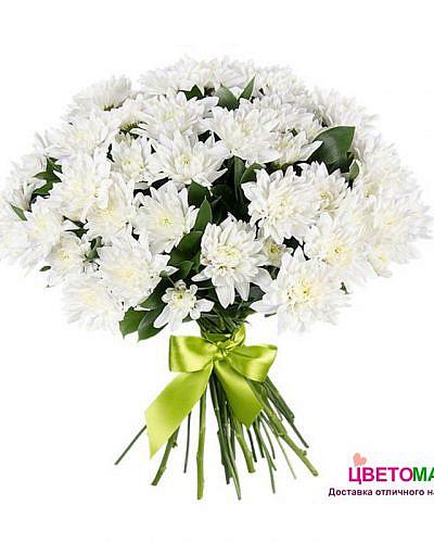Букет из 9 белых хризантем балтика