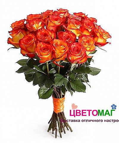 Букет 21 роза Хай Меджик 50 см (Эквадор)