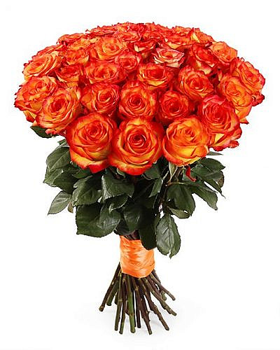 Букет 35 роз Хай Меджик 50 см (Эквадор)