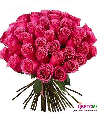 Букет 51 розовая роза Pink Floyd 50 см (Эквадор)