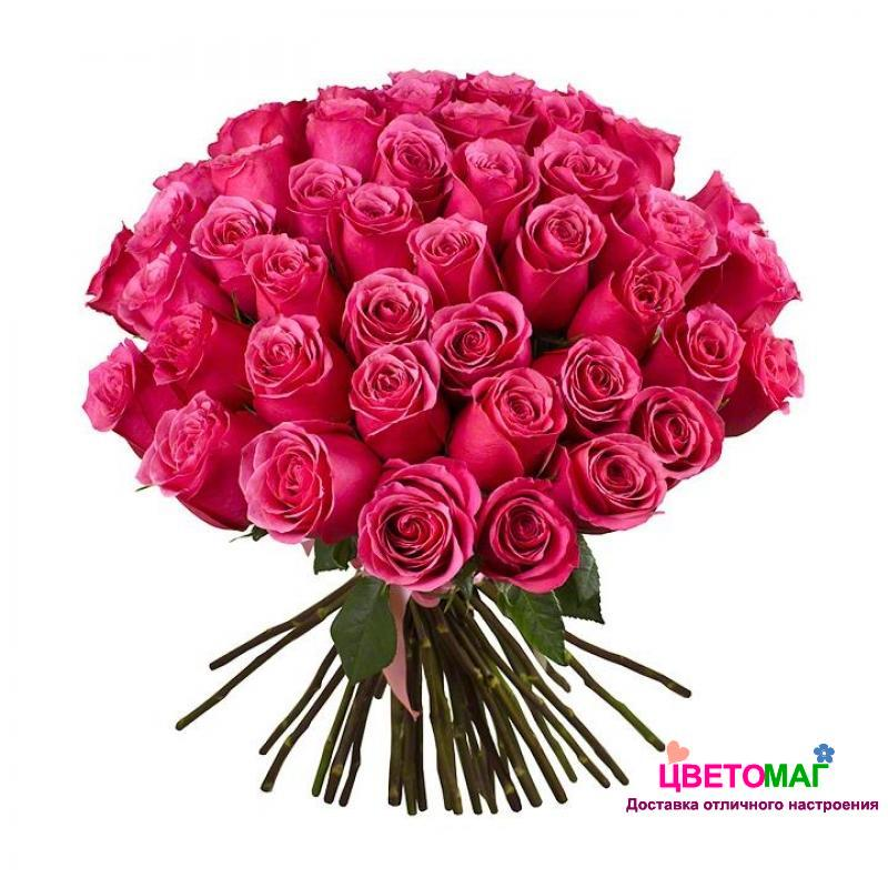 Букет 51 розовая роза Pink Floyd 60 см (Эквадор)