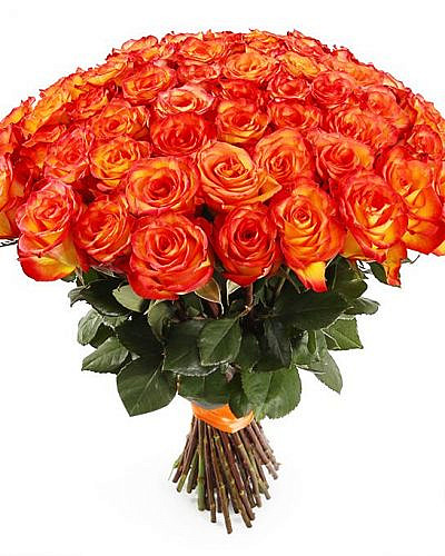 Букет 51 роза Хай Меджик High Magic 50см (Эквадор)