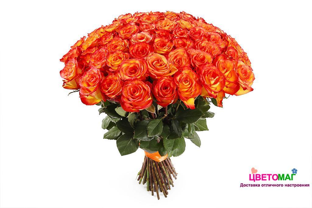 Букет 51 роза Хай Меджик High Magic 70см (Эквадор)