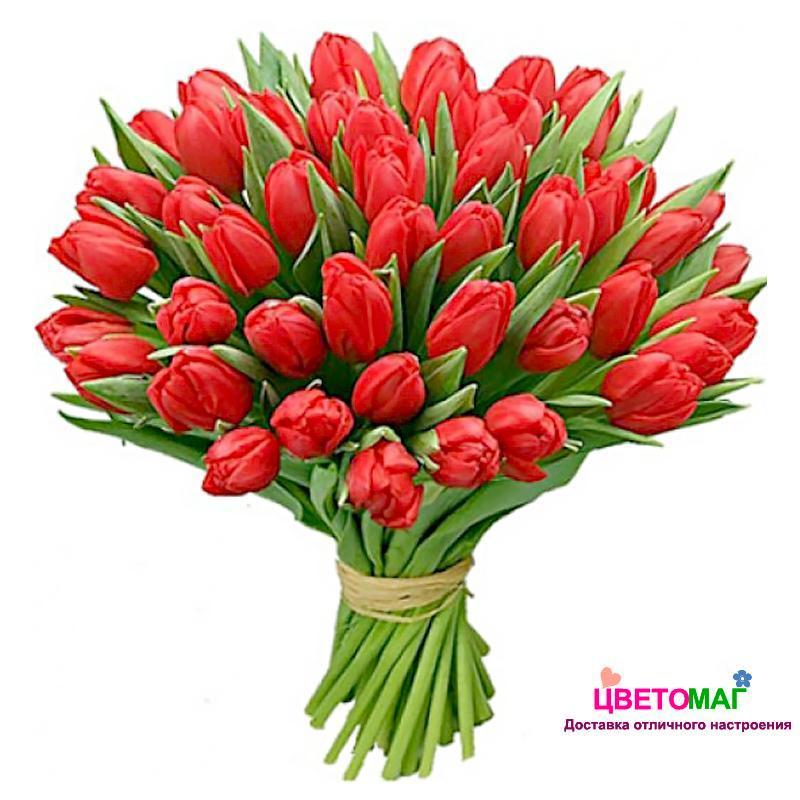 Букет из 101 тюльпана красного цвета