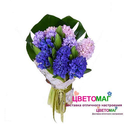 Букет из 11 синих и розовых гиацинтов