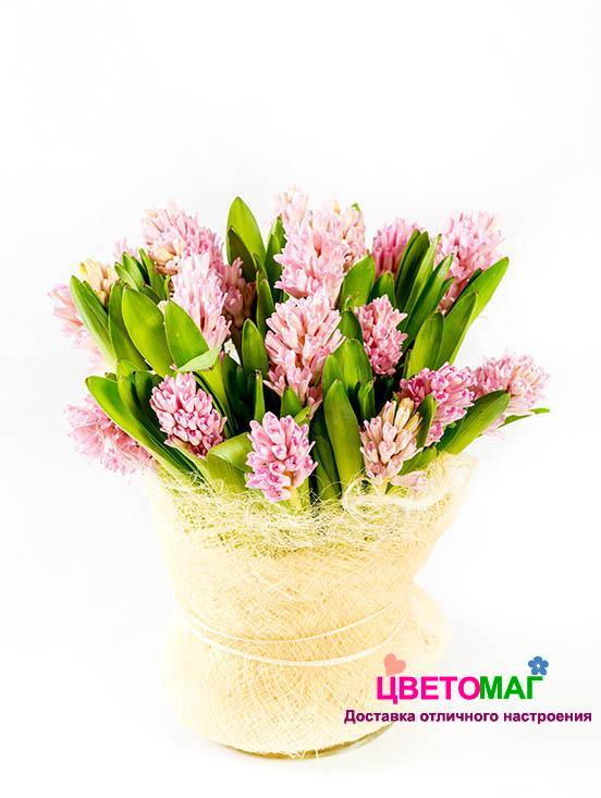 Букет из 15 розовых гиацинтов