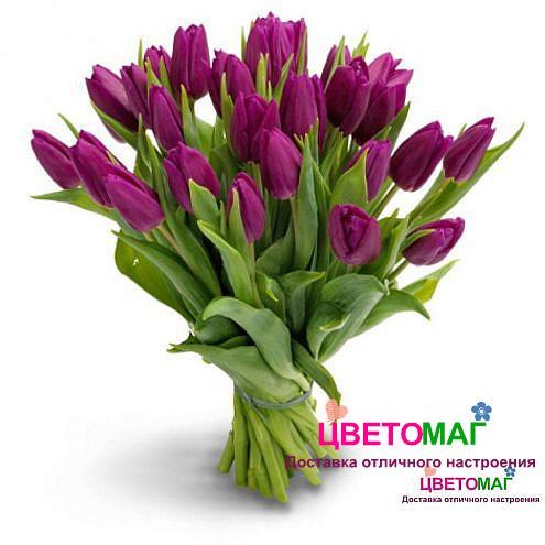 Букет из 25 фиолетовых тюльпанов.