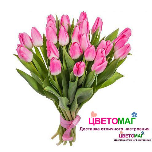 Букет из 25 ярко-розовых тюльпанов