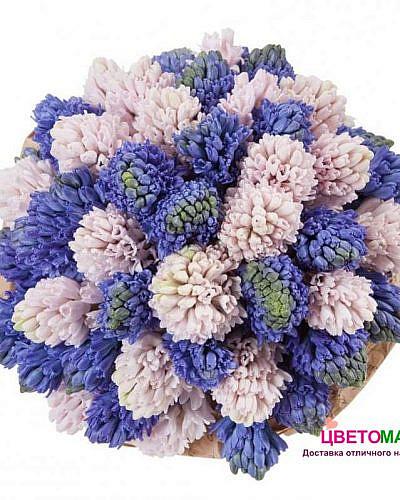 Букет из 39 розовых и синих гиацинтов