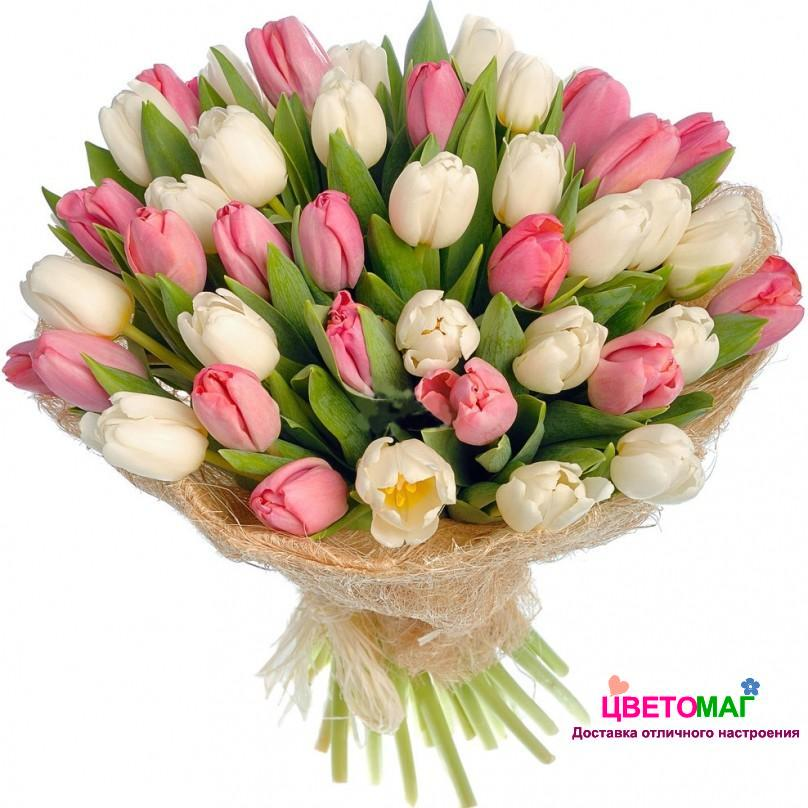 Букет из 55 тюльпанов белого и розового цвета