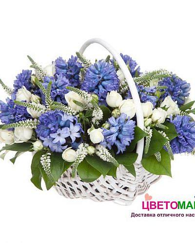 Корзина из синих гиацинтов и белых роз