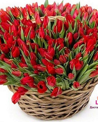 Корзина с 101 красным тюльпаном