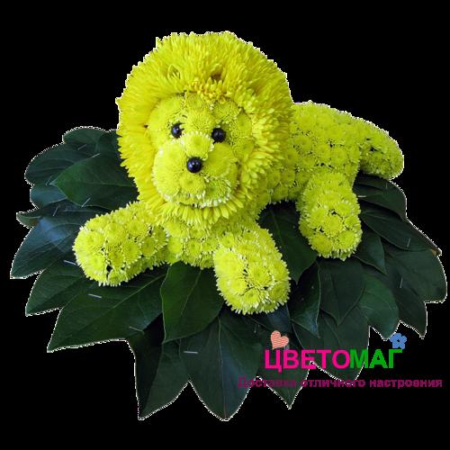 Купить львёнка из цветов (игрушка из хризантем,гербер)СПБ