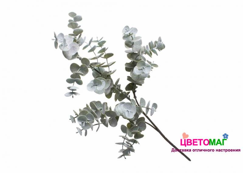 Листья эвкалипта Беби Блю