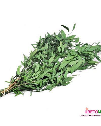 Листья эвкалипта Николи
