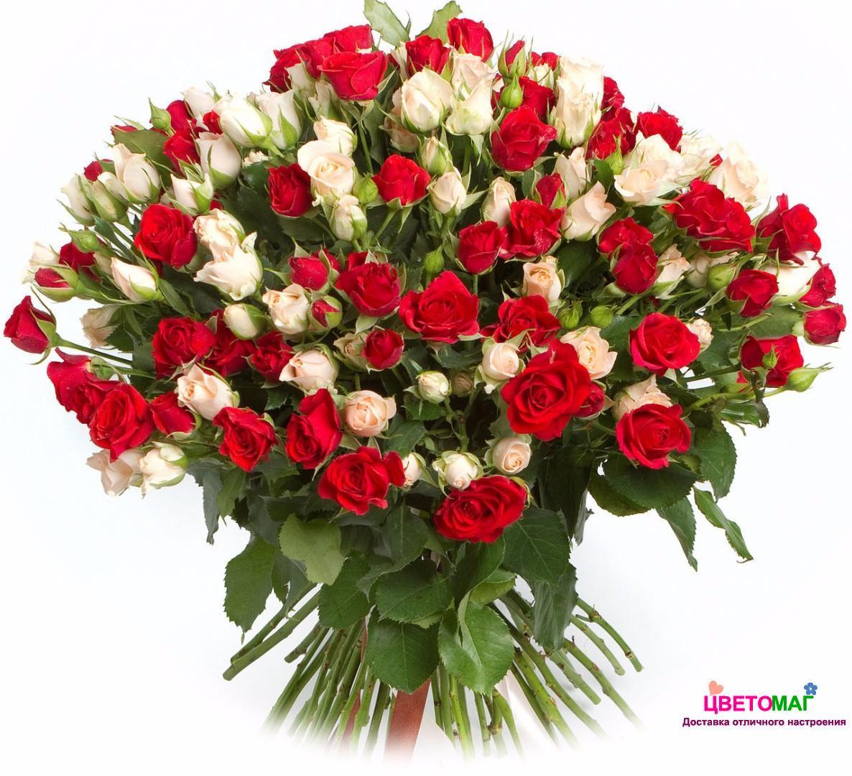 Букет из 51  красной и белой кустовой  розы