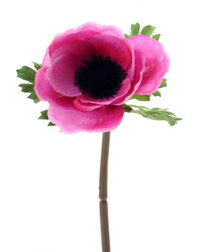 Анемон розовый