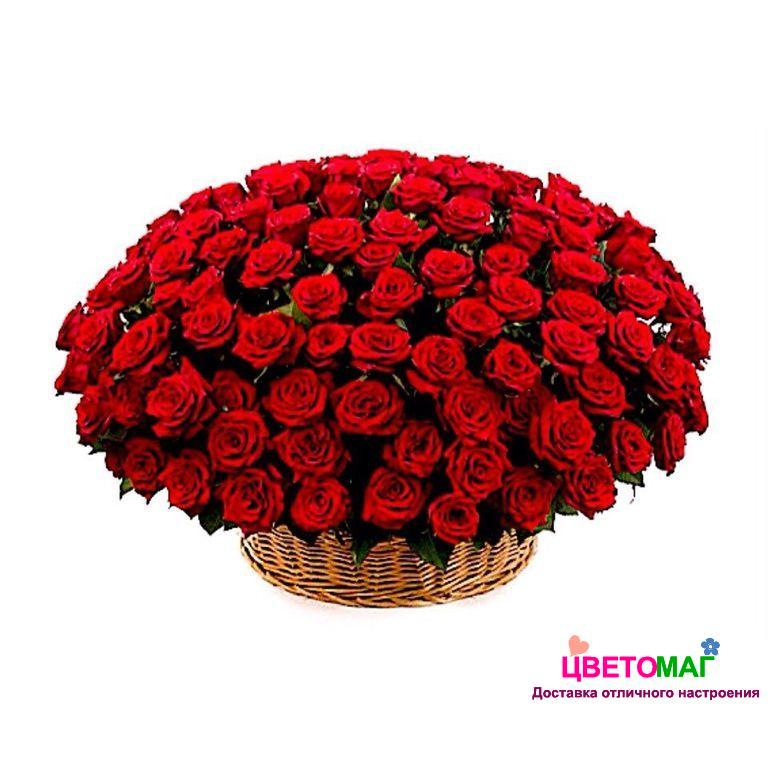 Корзина из 101 эквадорской розы