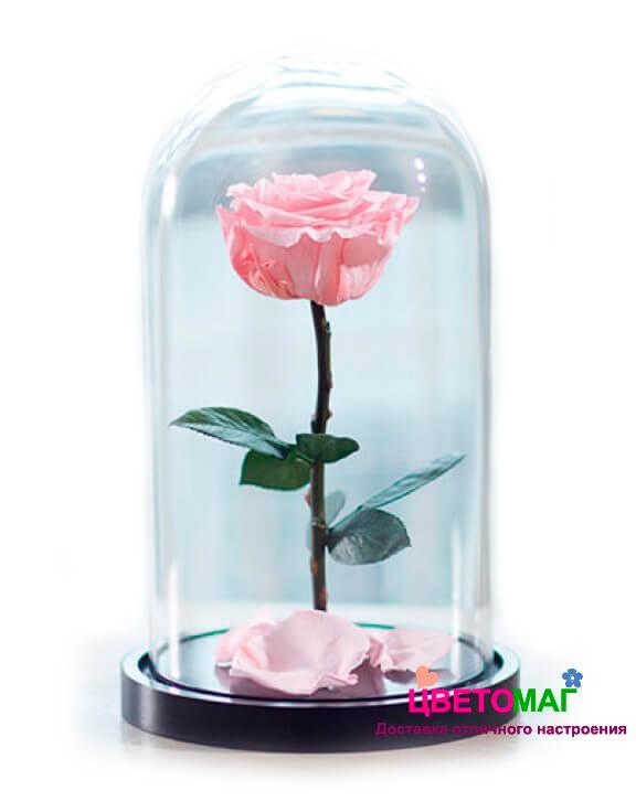 Роза в колбе розовая