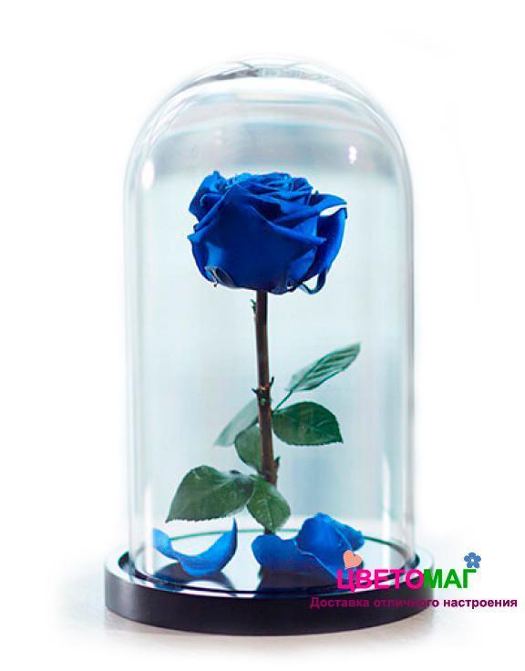 Роза в колбе синяя
