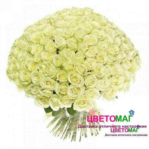 Букет 101 белая роза Mondial 60 см (Эквадор)