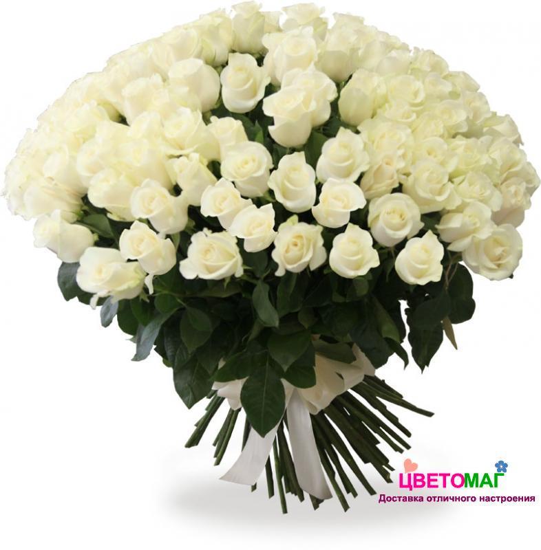 Букет 101 белая роза Vendela 50 см (Эквадор)