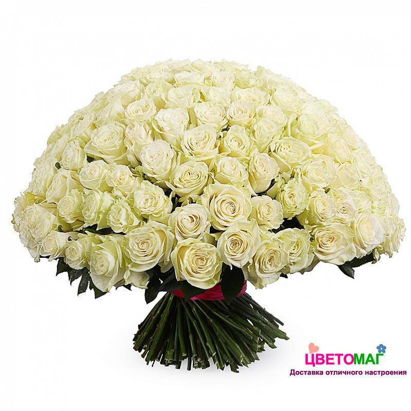 Букет 201 белая роза Mondial 60 см (Эквадор)