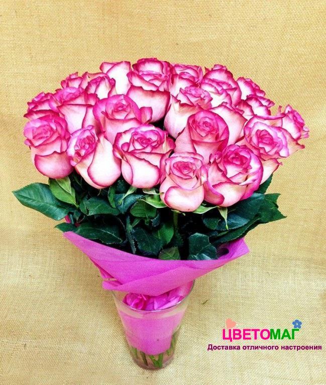 Букет 25 розовых роз Carousel 50 см (Эквадор)