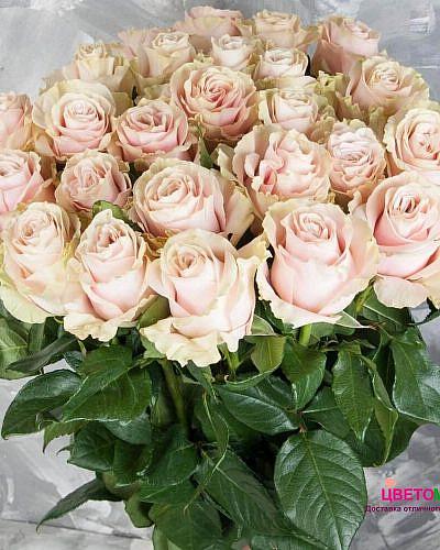 Букет 25 розовых роз Pink Mondial 70 см (Эквадор)