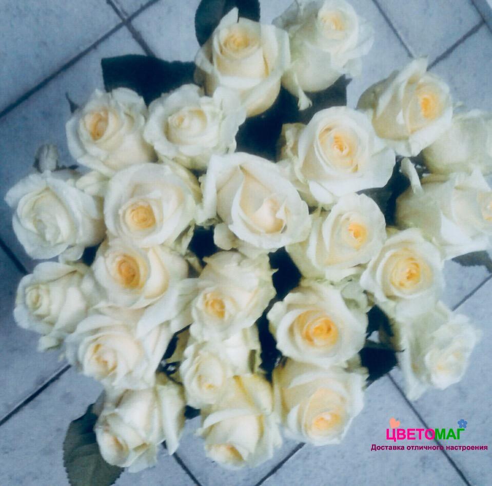 Букет 25 роз  Creme de la Creme (Эквадор) 50 см