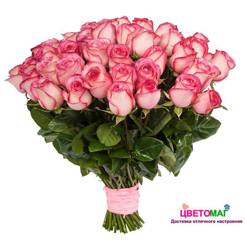 Букет 35 розовых роз Carousel 50 см (Эквадор)
