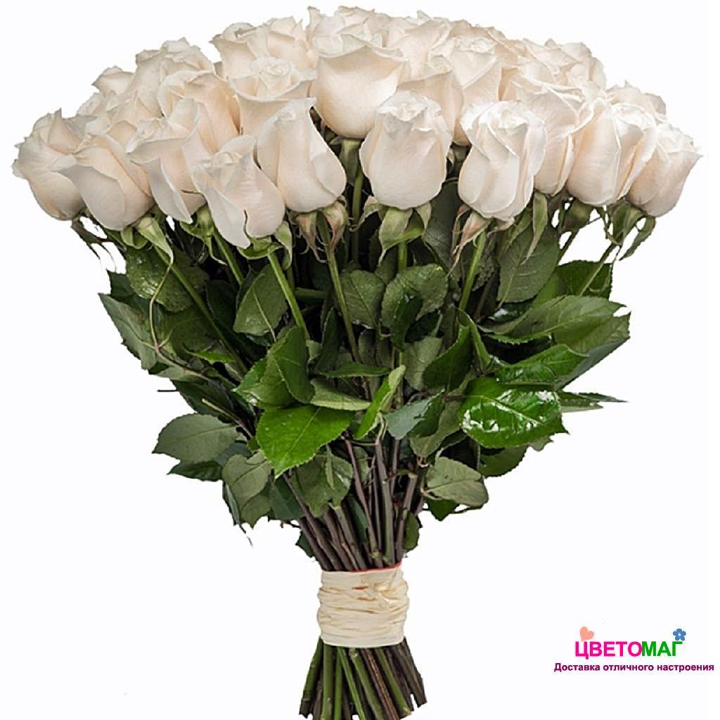Букет 45 белых роз  Vendela 50 см (Эквадор)