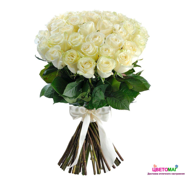 Букет 51 белая роза Mondial 70 см (Эквадор)