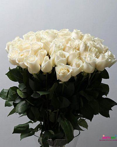 Букет 51 белая роза Vendela 50 см (Эквадор)