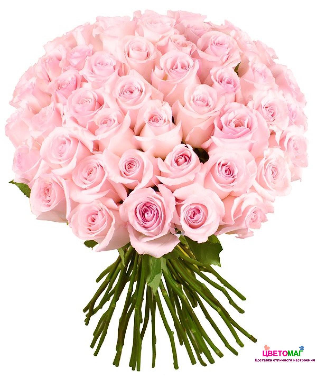 Букет 51 нежно-розовая роза Nena 60 см (Эквадор)