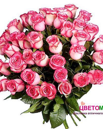 Букет 51 роза Carousel 60 см (Эквадор)