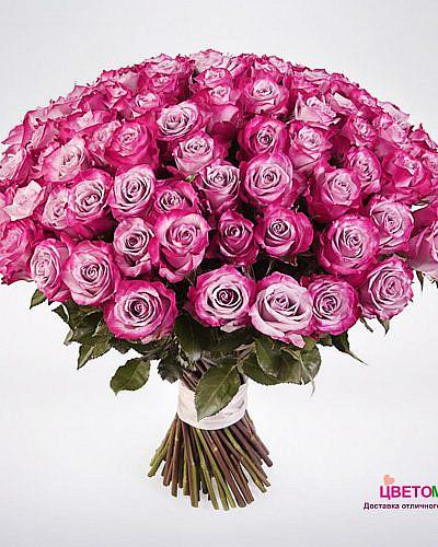 Букет 101 роза Deep Purple 50 см (Эквадор)