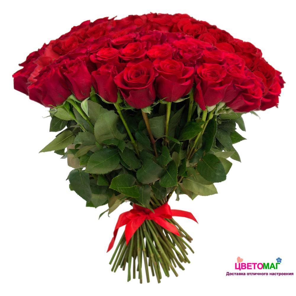 Букет из 101 красной розы  Freedom 50 см (Эквадор)