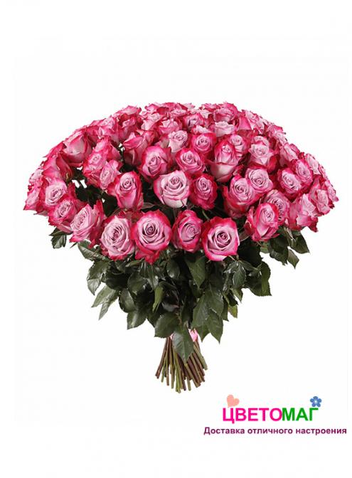 Букет 51 роза Deep Purple 60 см (Эквадор)