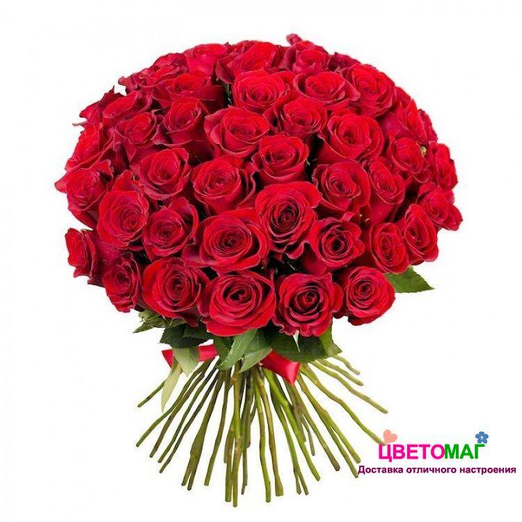 Букет из 51 красной розы  Freedom 50 см (Эквадор)