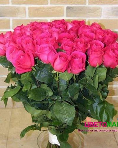 Букет 51 розовая роза Pink Floyd 70 см (Эквадор)