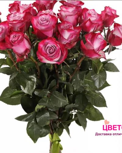 Букет 17 роз Deep Purple 50 см (Эквадор)